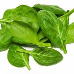 frischer grüner spinat
