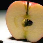 apfelkerne essen giftig