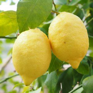 Zitronenkerne Essen