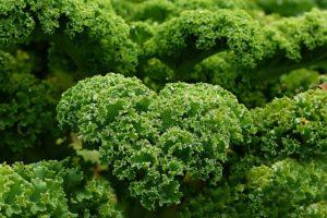 gruenkohl gesund